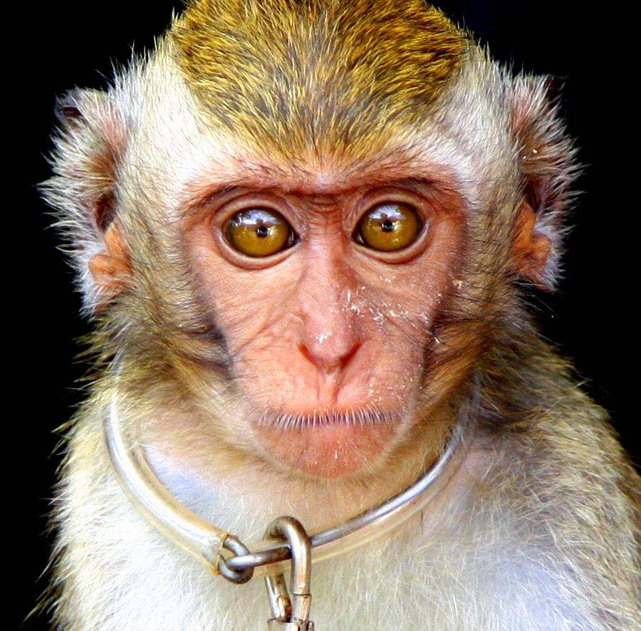 Bali: Sad Monkey