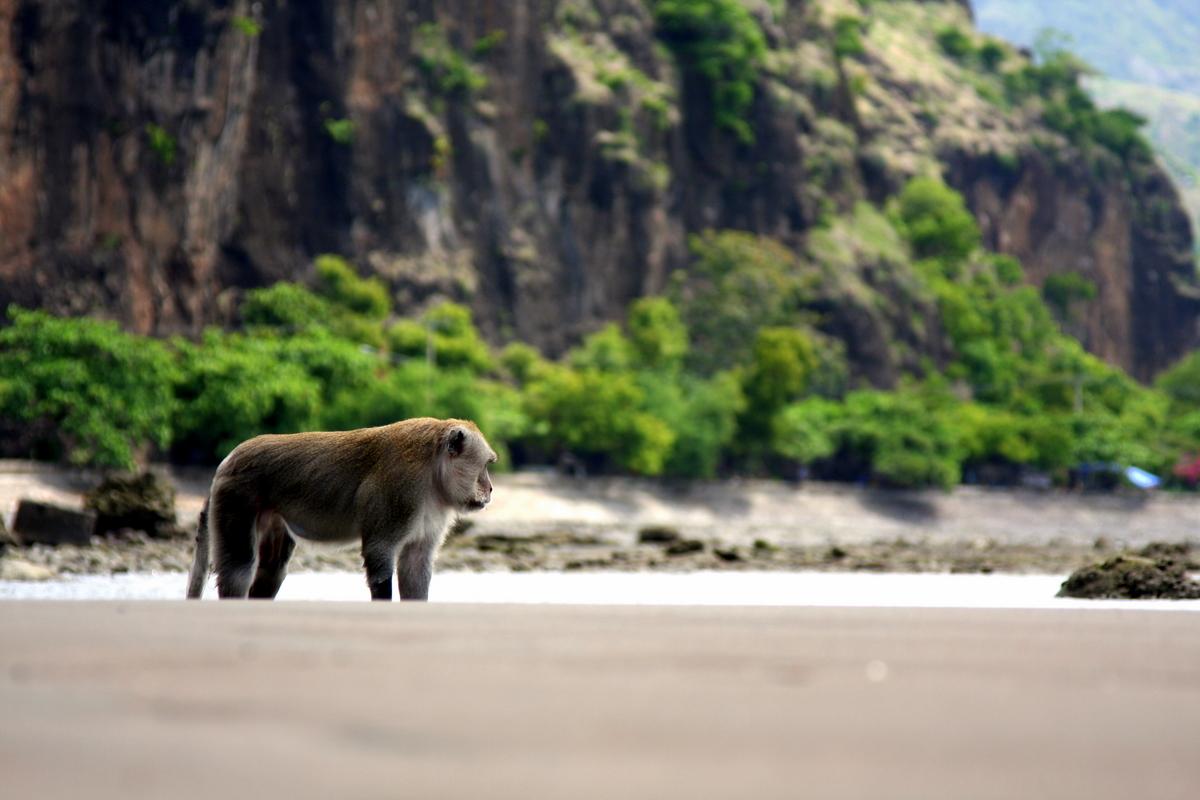 Bali: Monkey in Pemuteran