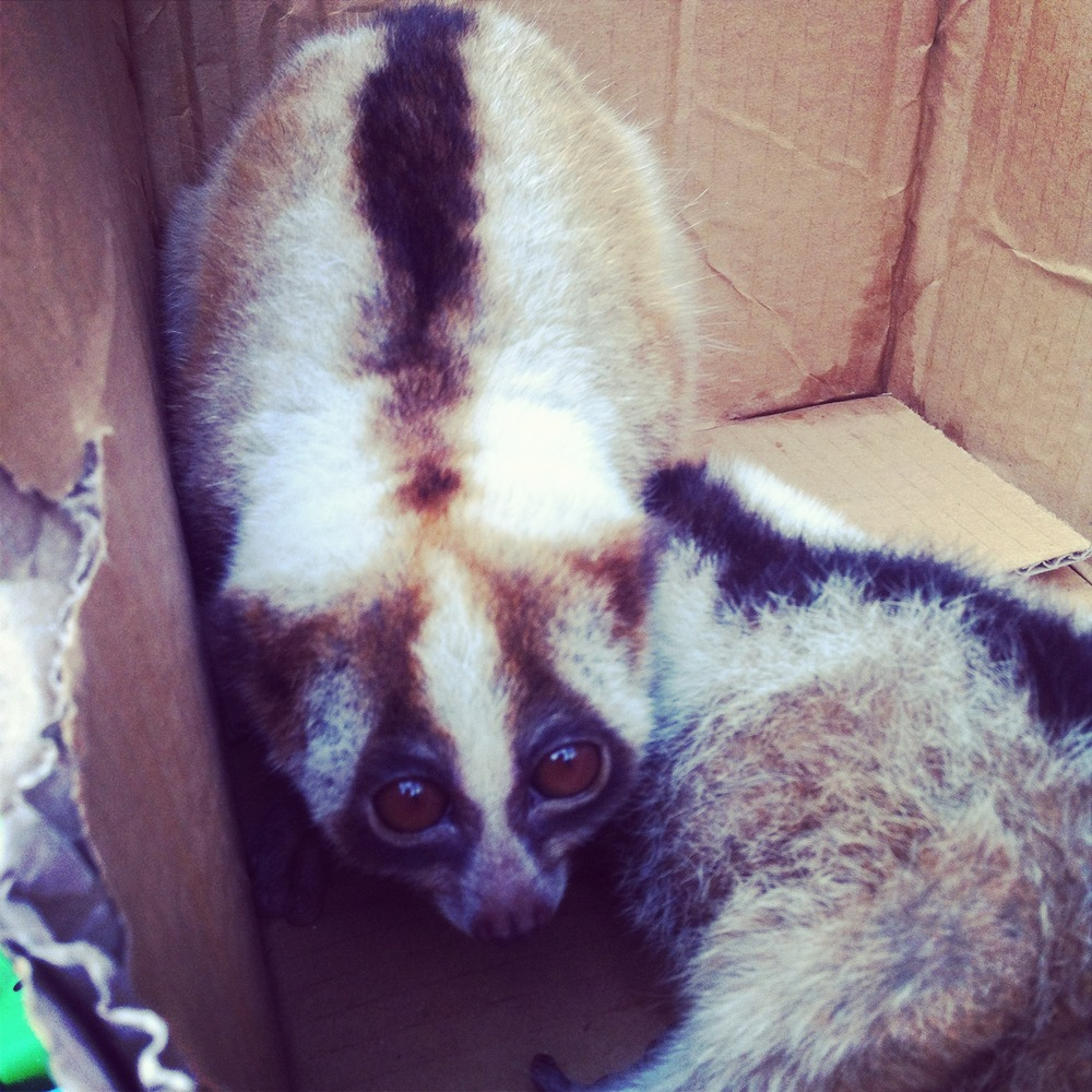Cuscus in a box