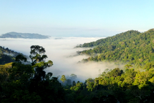 Waking up to a spectacular view over the forest in Bokeo
