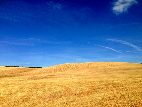 Fields of wheat are a feautre throughout the middle 2 weeks of the Camino