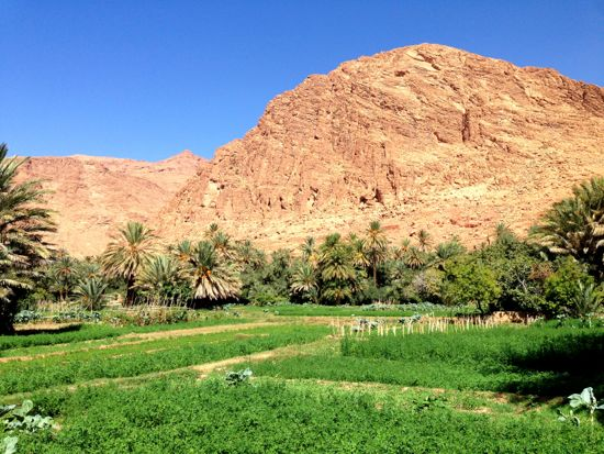 The oasis around Todra Gorge