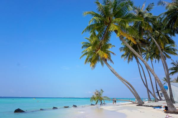 Maafushi beach is simply glorious.
