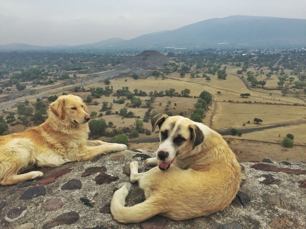 Dogs at Teotihuacan
