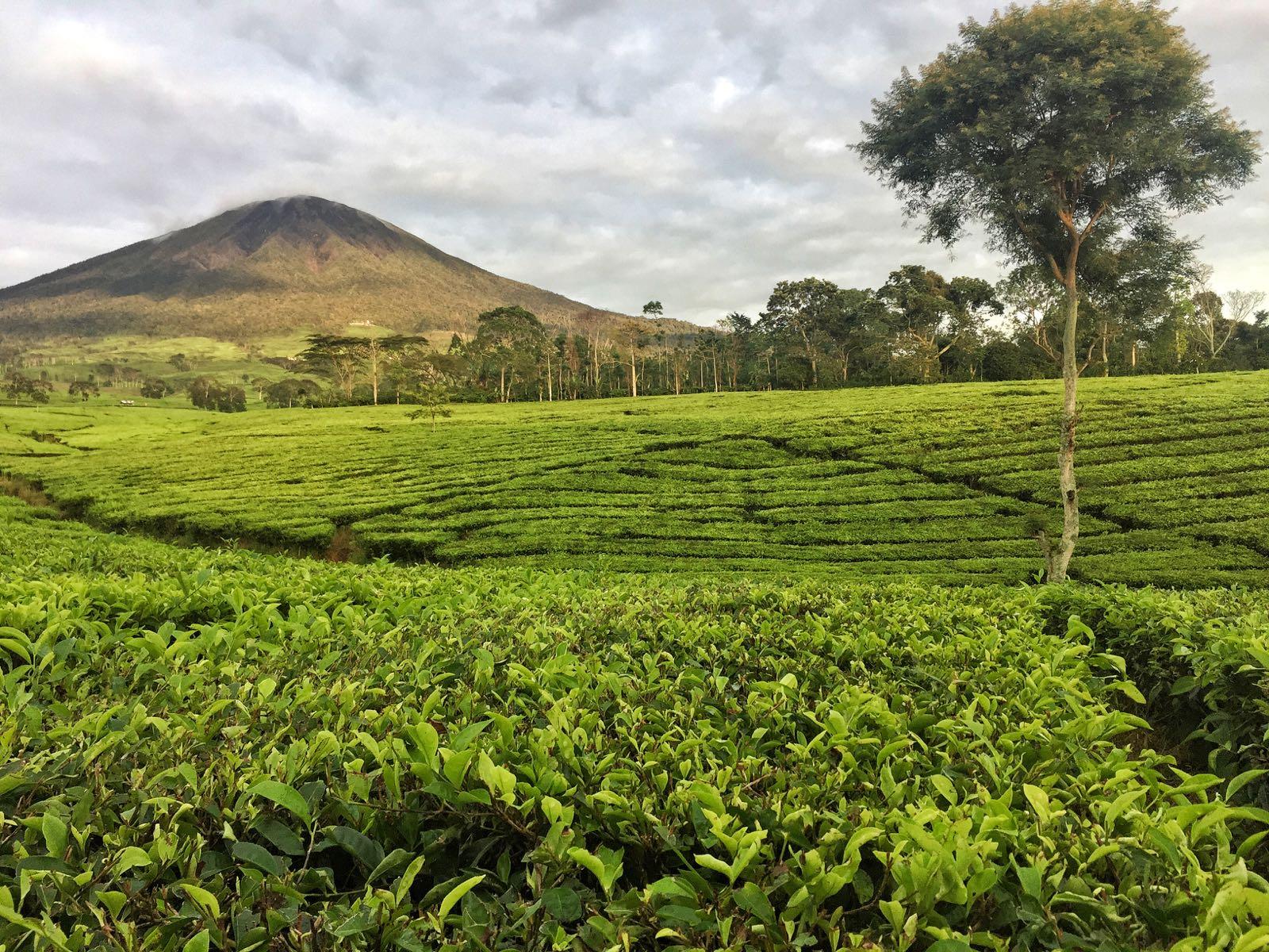 Gunung Dempo