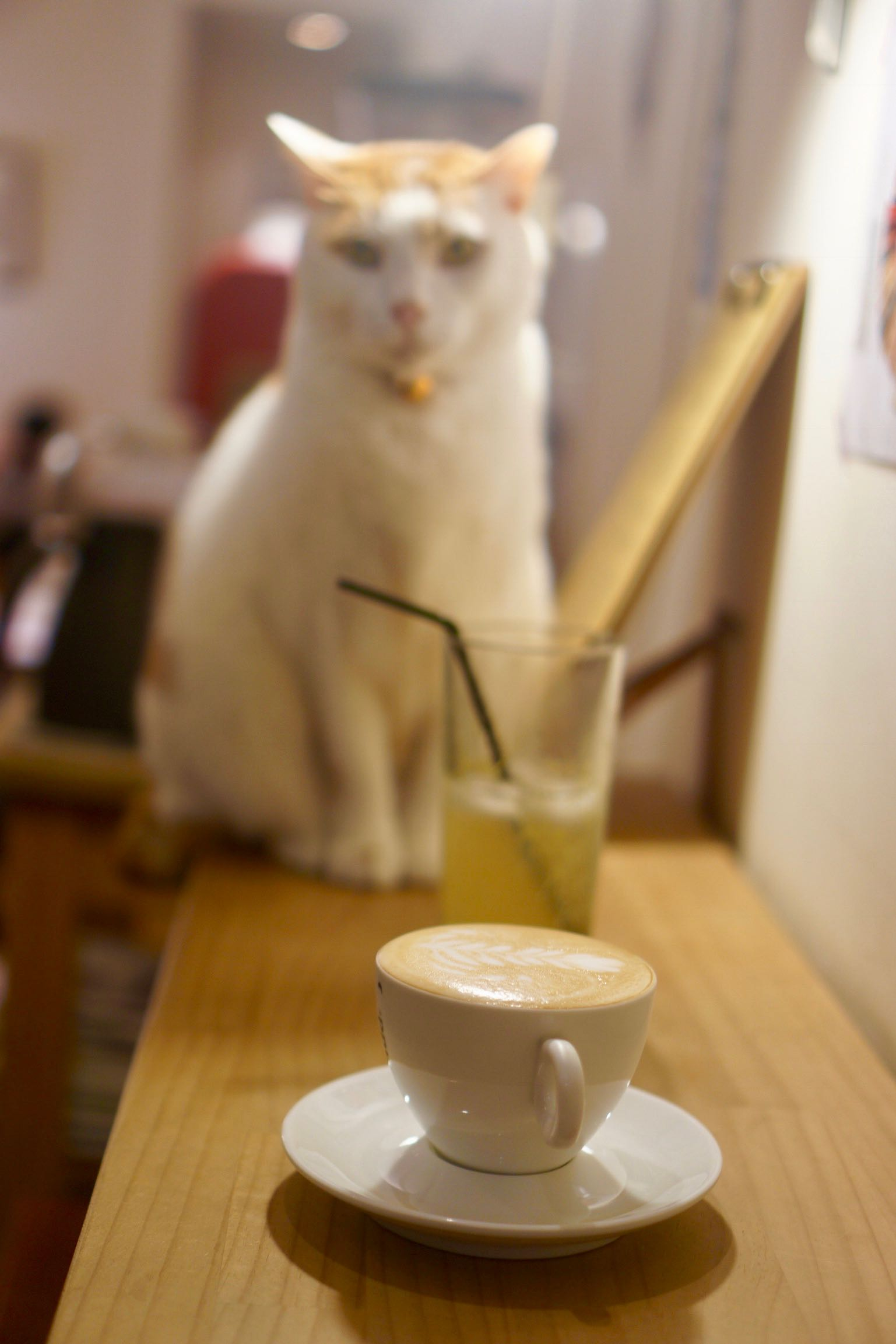 Coffee Lab Taipei cat