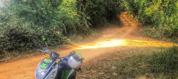 Dirt Road Through Jungle